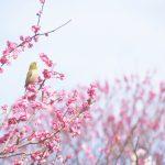 めまいが増える?春の陽気