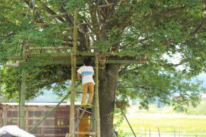 木登りする子供